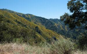 Big Sur Sanctuary Property Acquisition