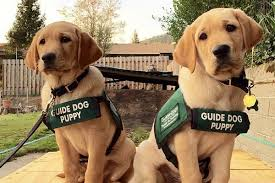 Guide Dogs for the Blind's New Puppy Center